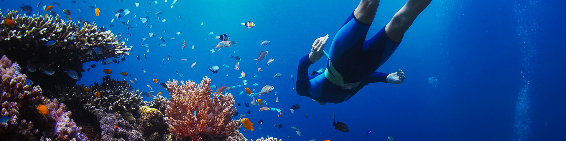 Diving in blue waters of Galapagos Islands while on guided adventure tour in Galapagos Islands