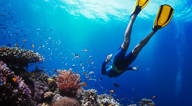 Scuba diver is a must-do while on guided adventure tour in Galapagos Islands