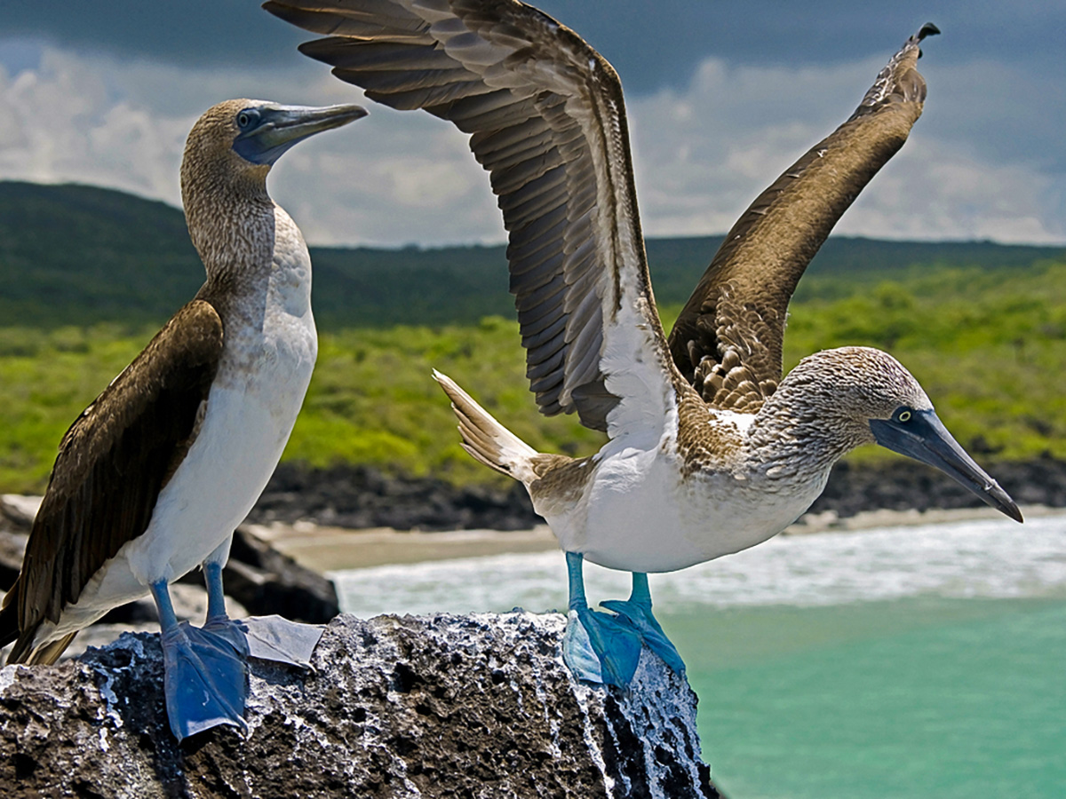Marine birds on guided Galapagos Adventure Tour in Galapagos Islands