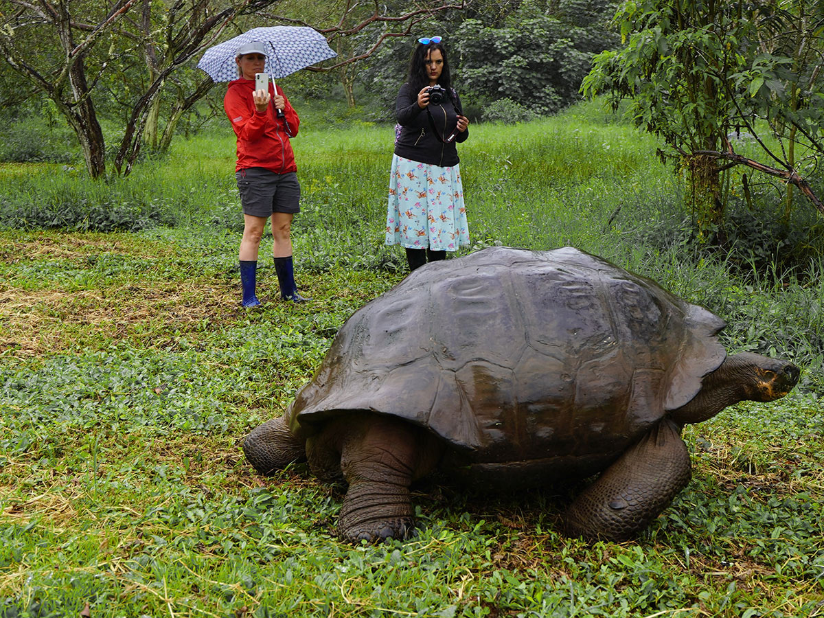 Giant Tortoise on Galapagos Adventure Tour in Galapagos Islands