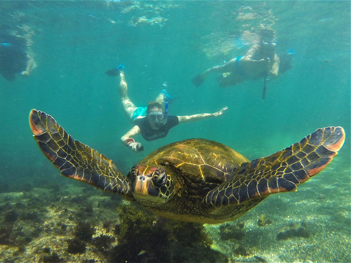 Snorkeling around a giant tortoise on guided Galapagos Adventure Tour in Galapagos Islands