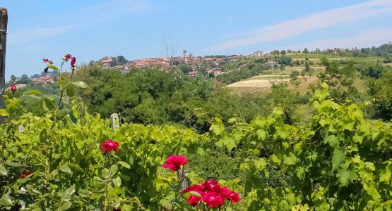 Panoramic views from Piedmont Barolo Hills to Barbaresco Walking
