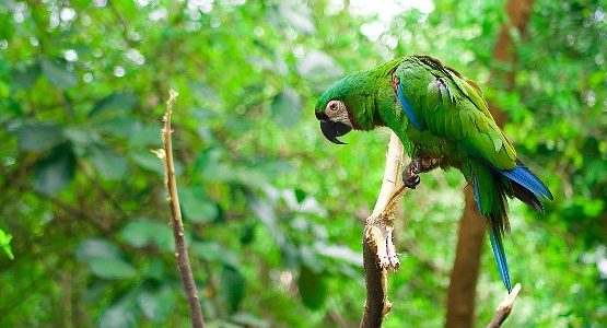 Parrot at Ecuadorian Amazon Rainforest