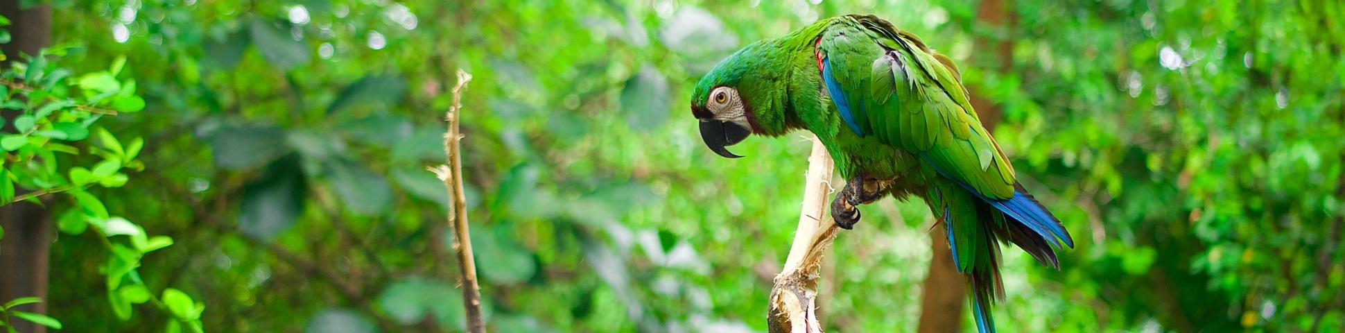 Parrot in Ecuadorian Amazon Rainforest