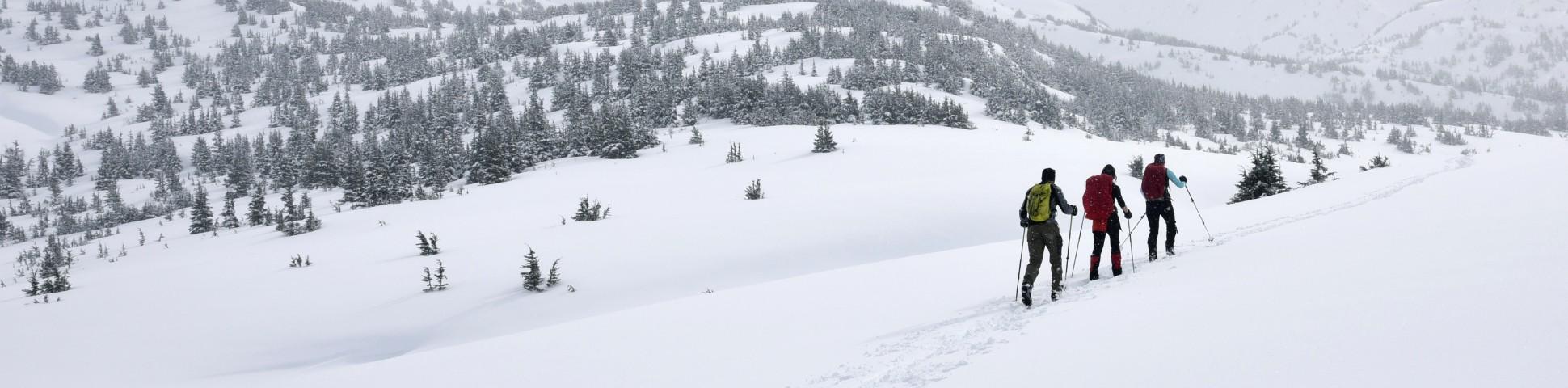 Three skiers skiing in snowed in backcountry