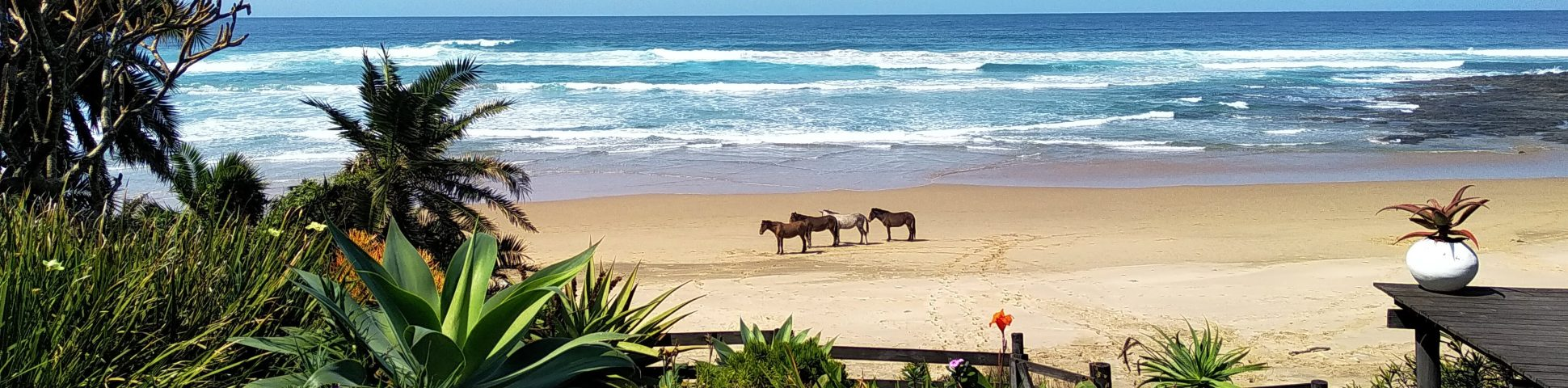 Horses at the beach of Eastern Cape (South Africa)