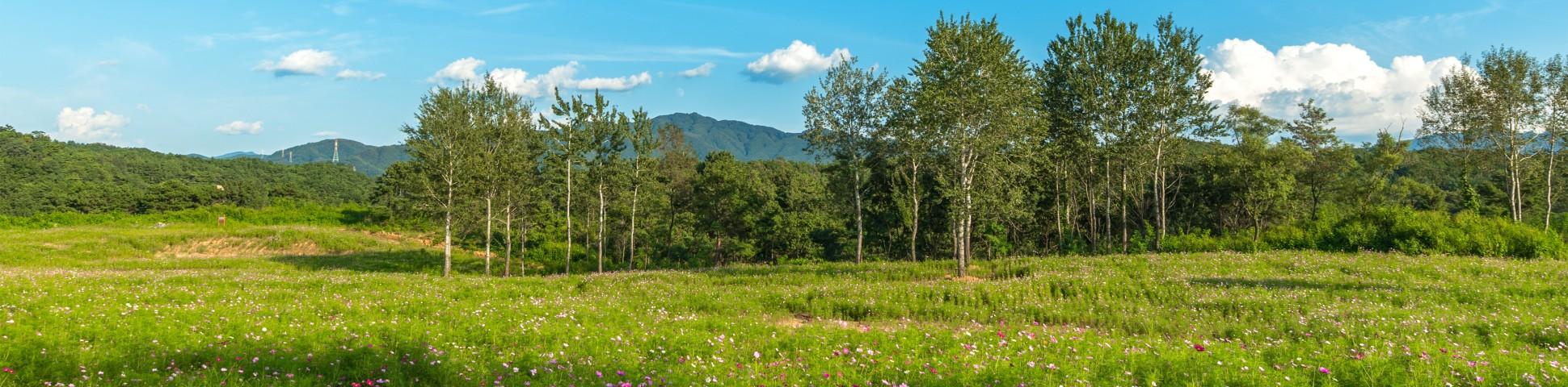 Lush green fields in Gangwon-do (South Korea)