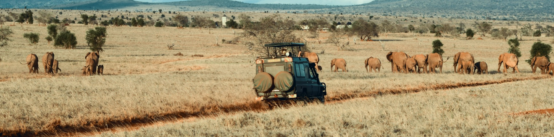 Herd of elephants spotted on safari in Africa