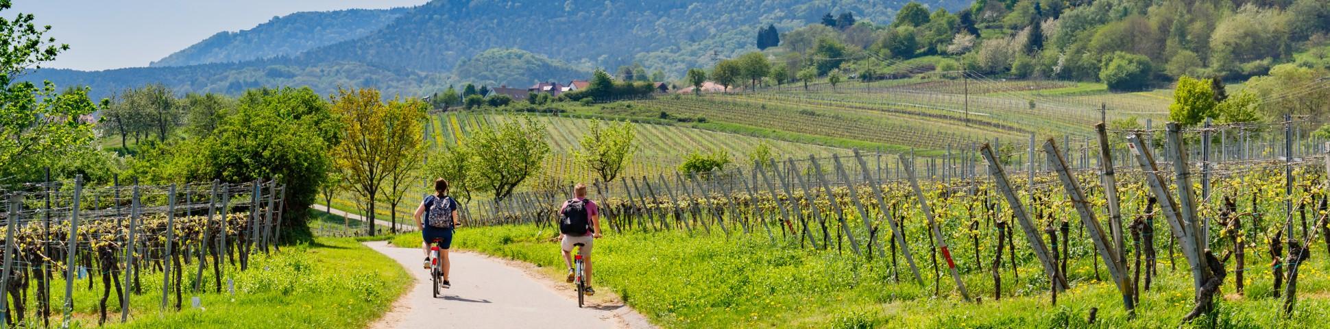Biking path through vineyards