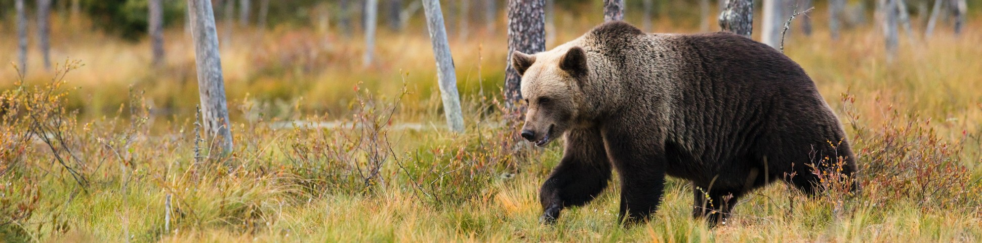 Bear spotted on wildlife watching tour