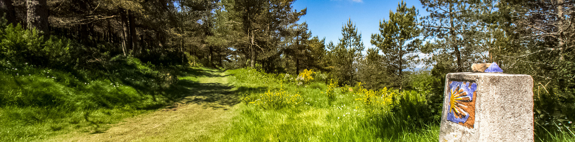 Panoramic view from Complete Camino de Santiago
