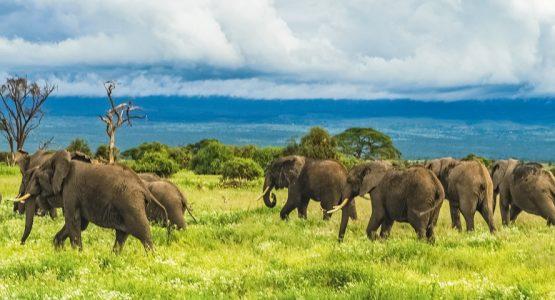 Panoramic view from Great Migration Safari Tour