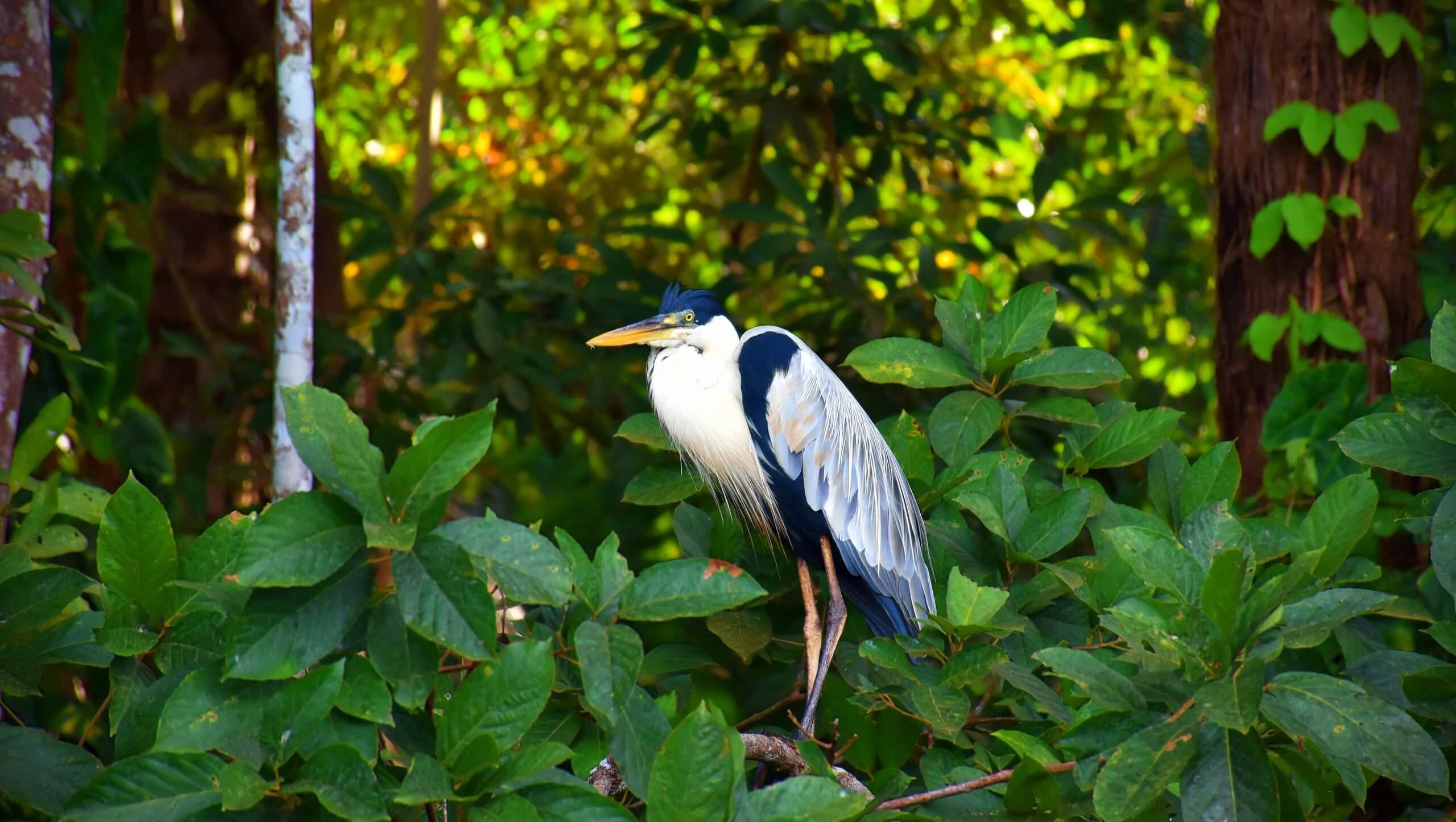 Amazon Birdwatching Expedition