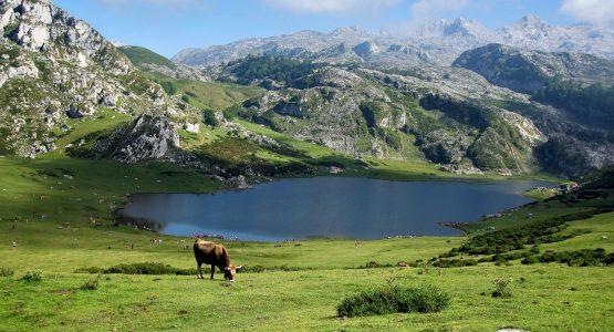 Beautiful meadows in Asturias