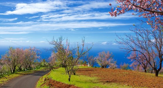 Sea Views in La Palma Island