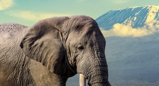 Panoramic views from Kilimanjaro to Ngorongoro biking tour