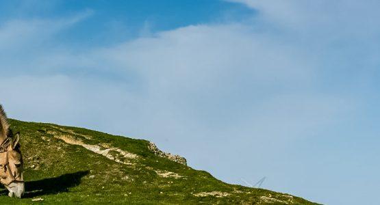 Panoramic view from Corsica Family Donkey Trek