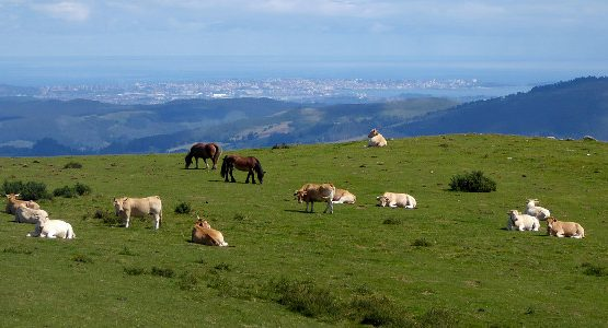 Horses and cows on top of the mountain in Cantabria