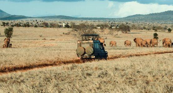Overland safari and elephants