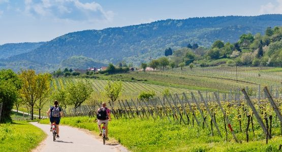 Two bikers cycling through the vineyards