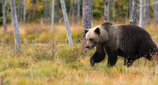 Bear spotted on wildlife watching tour in Canada