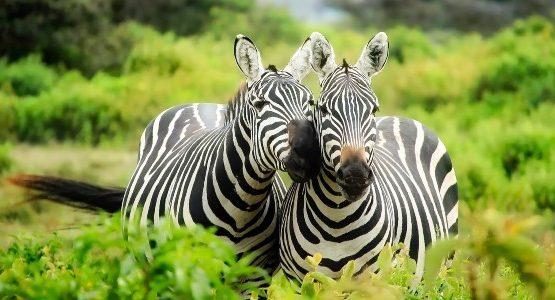 Wildlife Watching