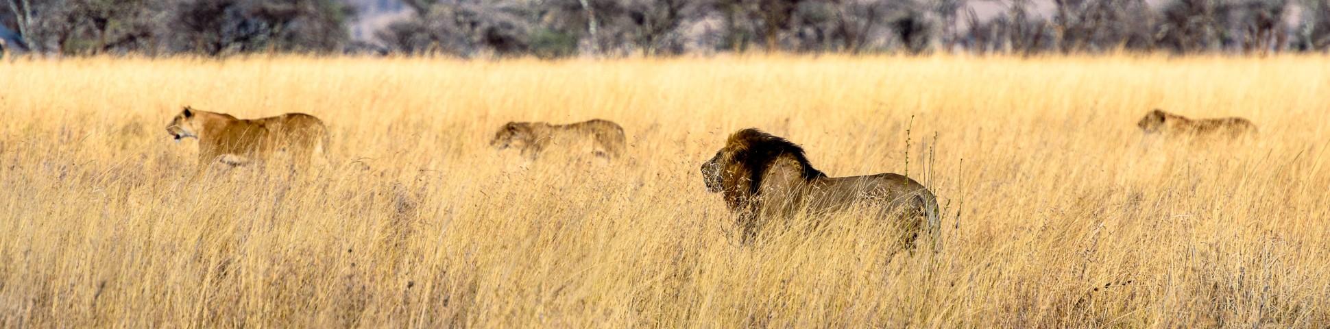 Serengeti in Tanzania