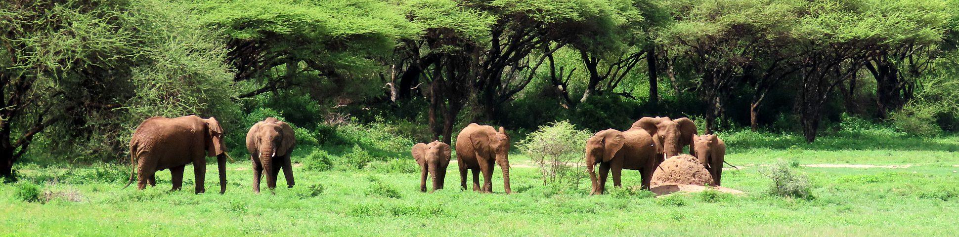 Ngorongoro in Tanzania