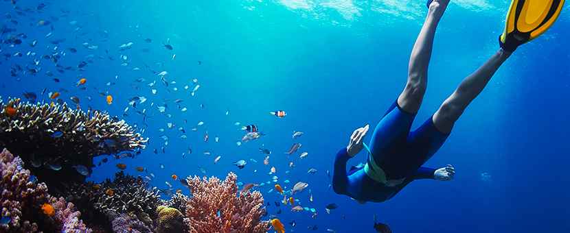 Diving in Pacific Ocean on guided adventure tour in Galapagos Islands