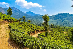 Western Ghats Luxury Trekking Tour teaser