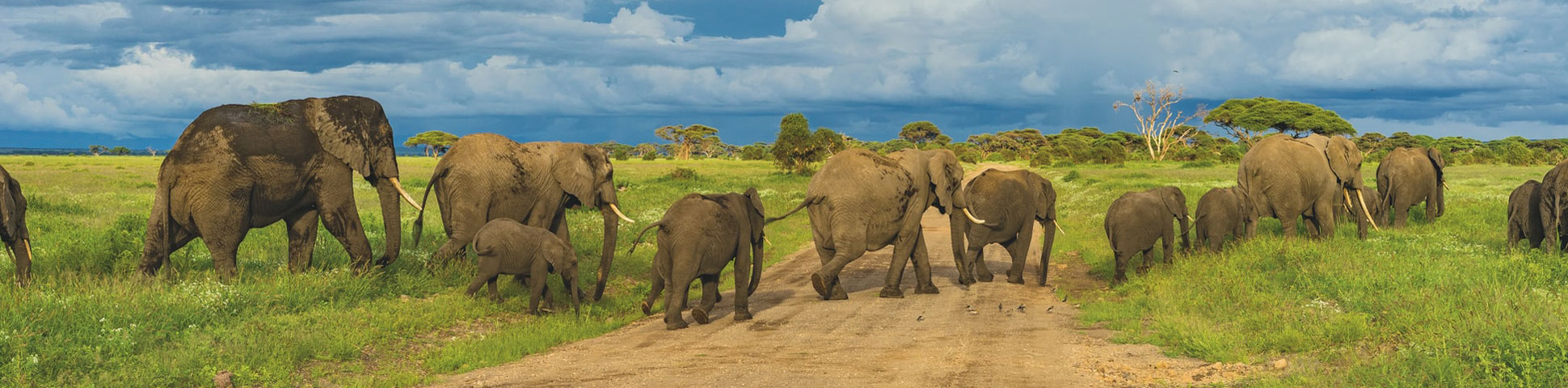 Guided and self guided tours spotting wildlife in Tanzania