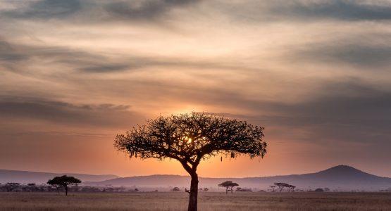 Tanzanian Safari tree on this bike tour