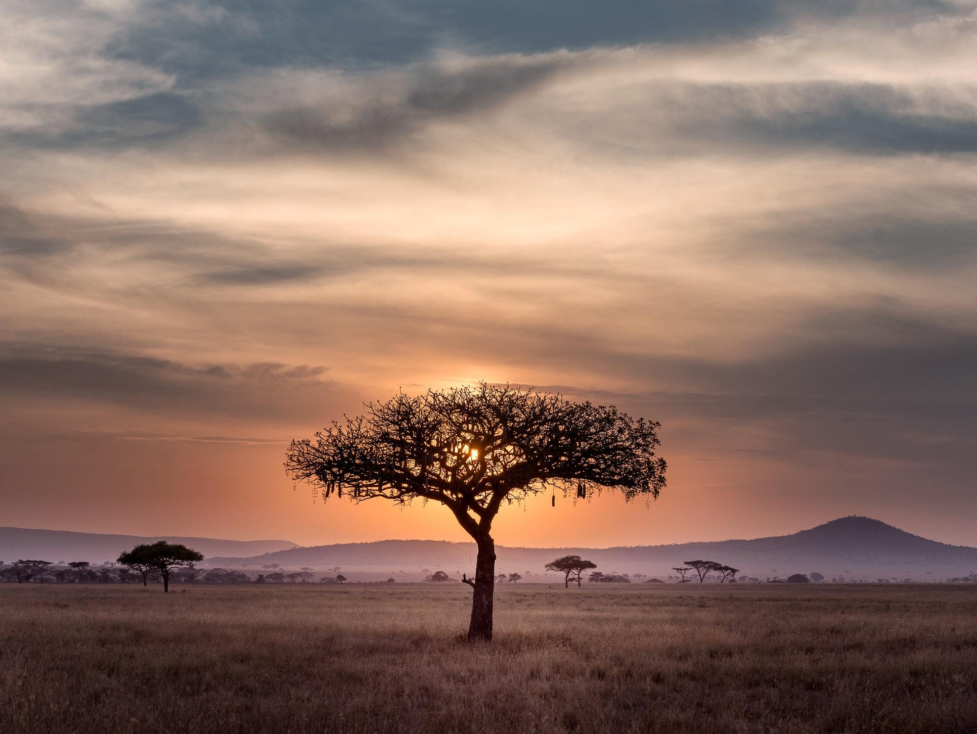 Trees in savannah on guided Kilimanjaro to Ngorongoro Cycling Tour