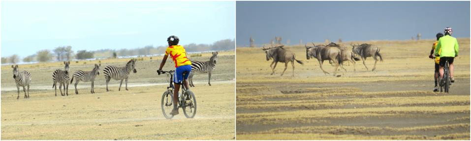 Biking from Tarangire to Manyara on guided Kilimanjaro to Ngorongoro Cycling Tour
