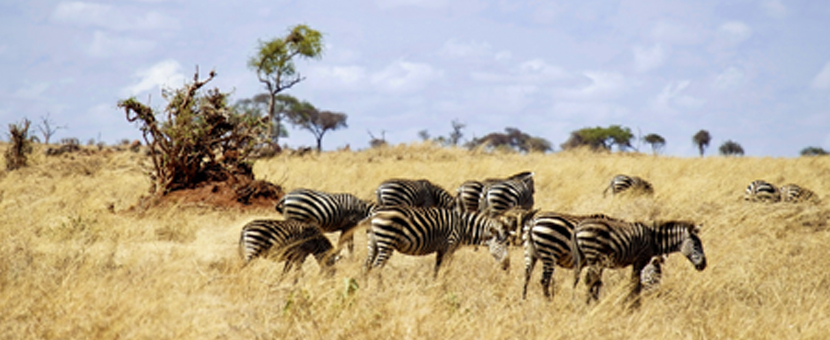 Wildlife along guided Kilimanjaro to Ngorongoro Cycling Tour