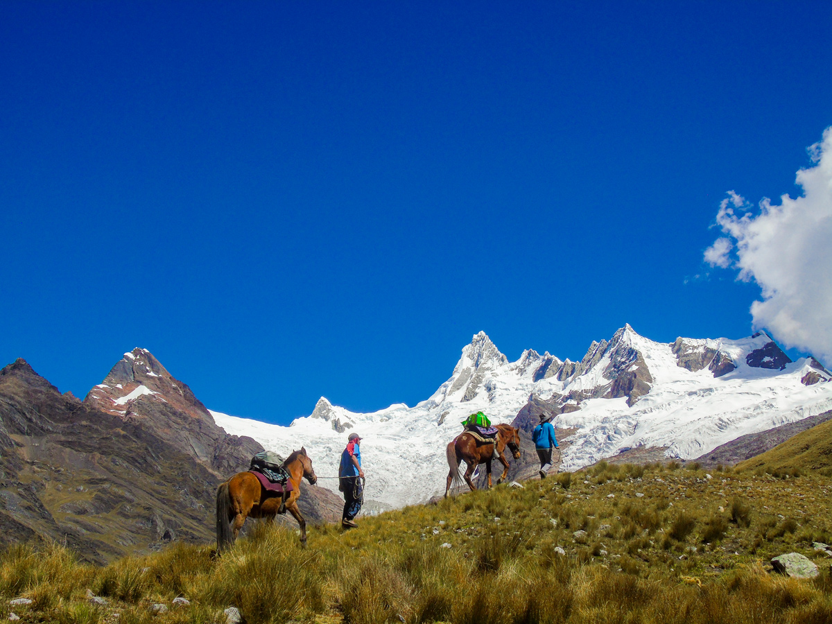 Horses carrying gear on Alpamayo to Pomabamba trek in Peru