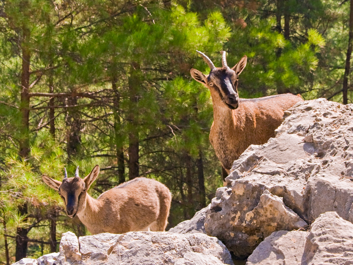 Wildlife along guided trek in the White Mountains of Crete, Greece