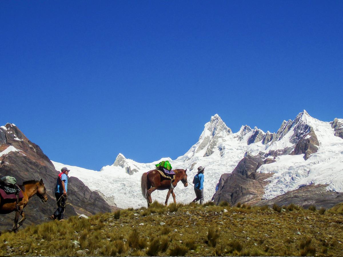Horses carrying loads on Alpamayo trek in Cordillera Blanca, Peru