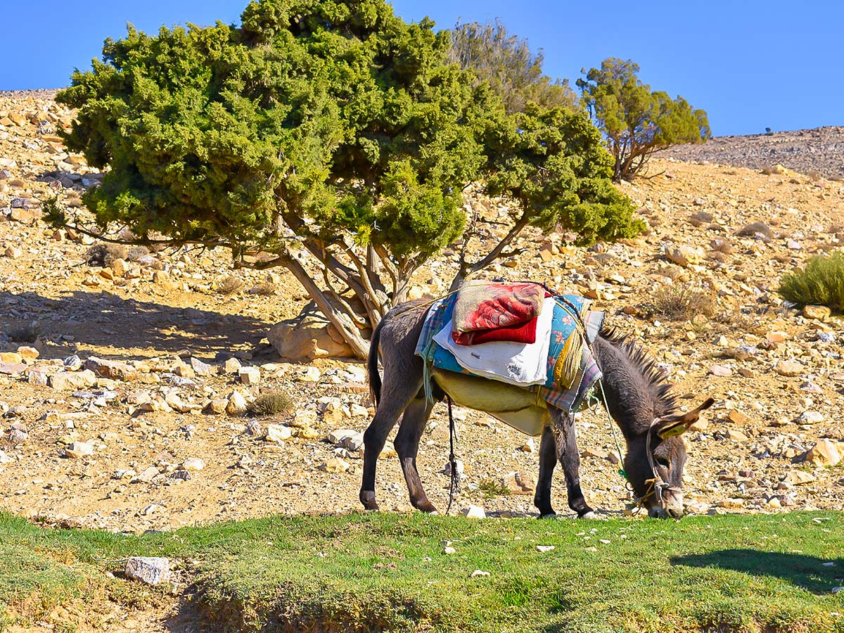Donkey having a break on Dana to Petra Trekking Tour in Jordan