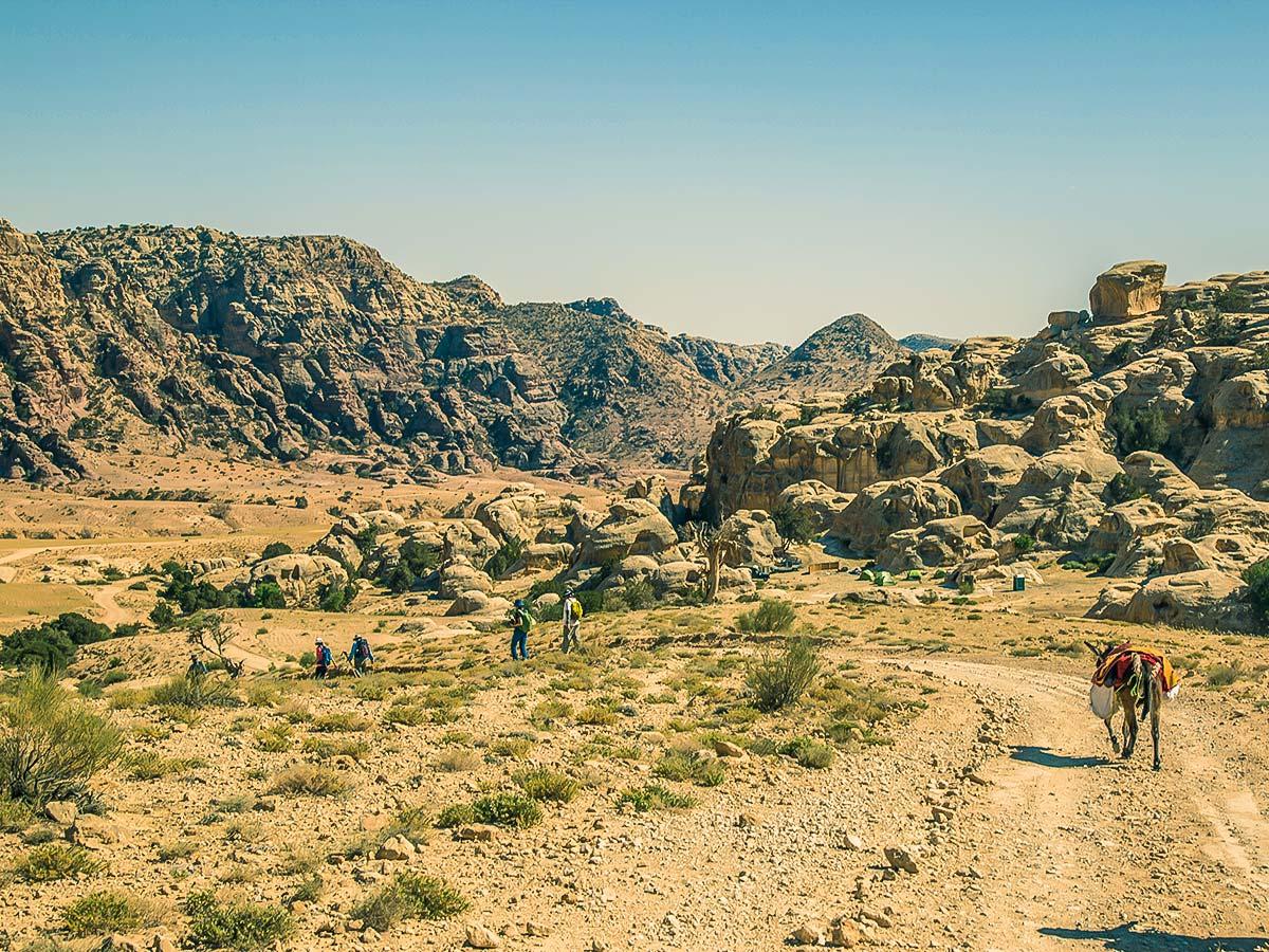Donkey carrying bags on Dana to Petra Trekking Tour in Jordan