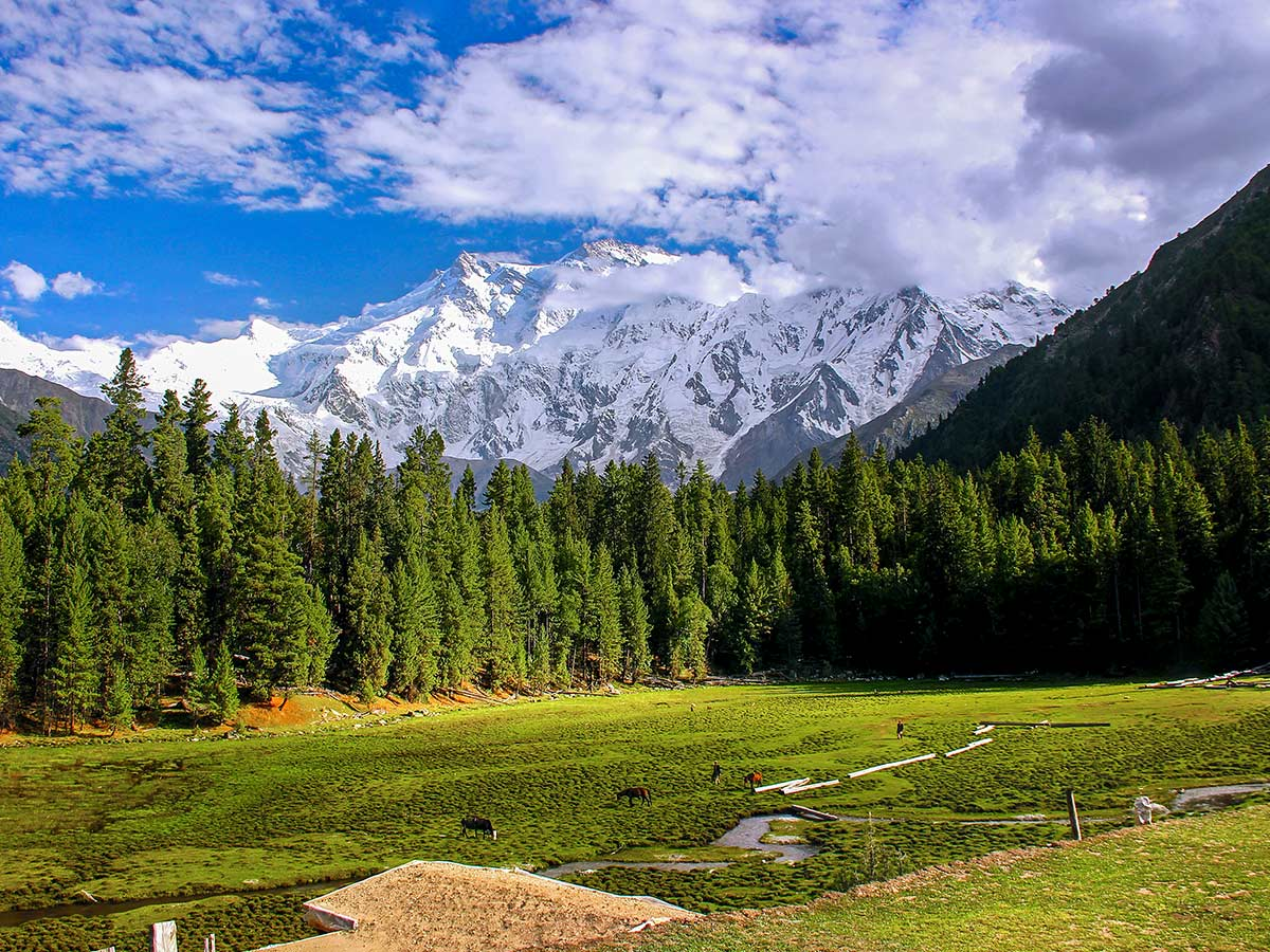 Views of Nanga Parbat on Fairy Meadows and Nanga Parbat Base Camp Tour in Pakistan