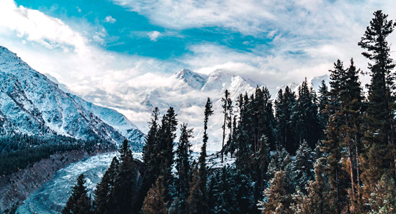 Snowy peaks above the forest on guided trekking tour to Fairy Meadows in Pakistan