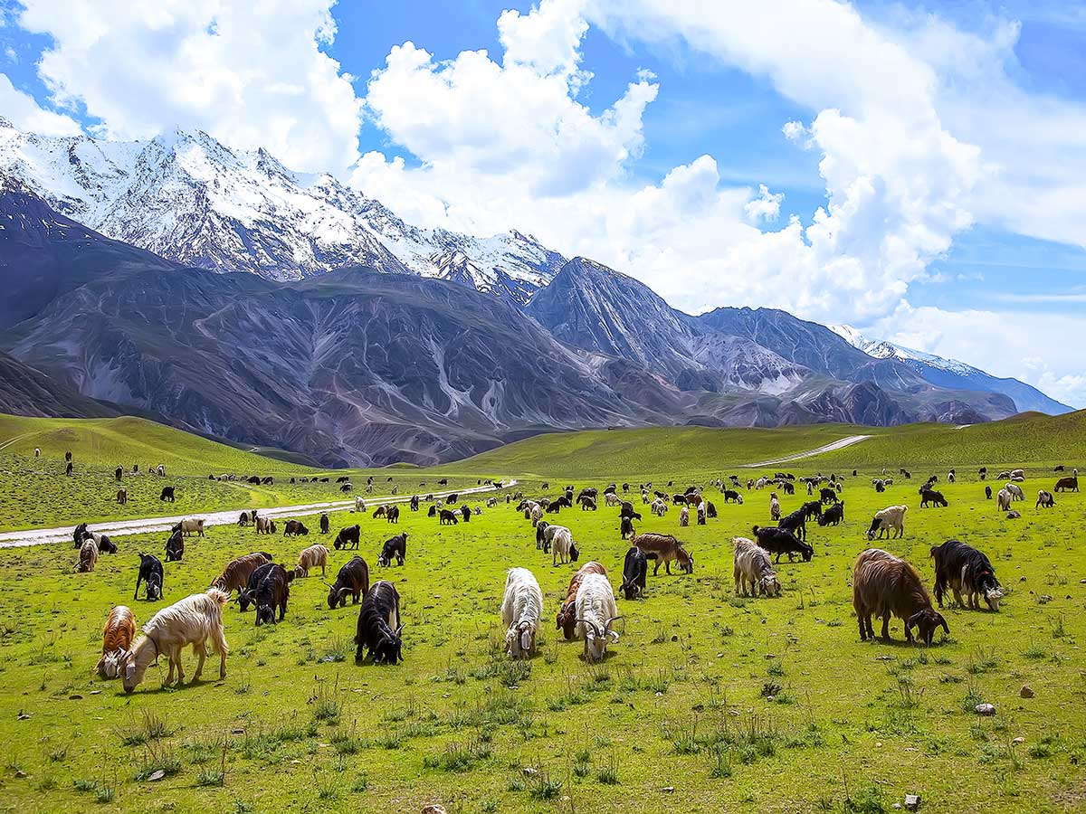 Horses in Gol National Park on Chitral Valley Overland Tour in Pakistan