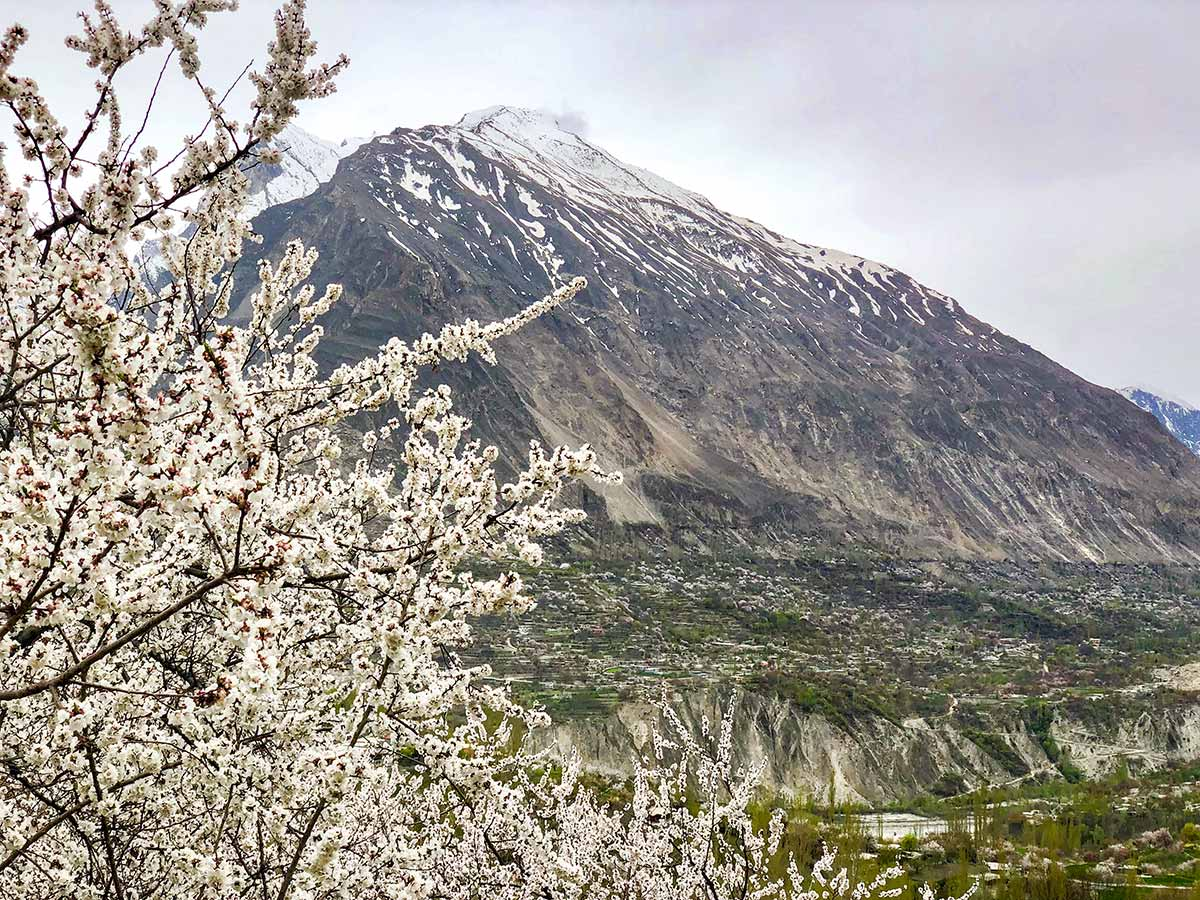 Blossom on Hanza Valley Overland Tour in Pakistan
