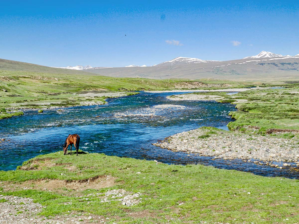 Horse drinking water in Deosan Plains guided Overland Tour in Skardu Valley Pakistan