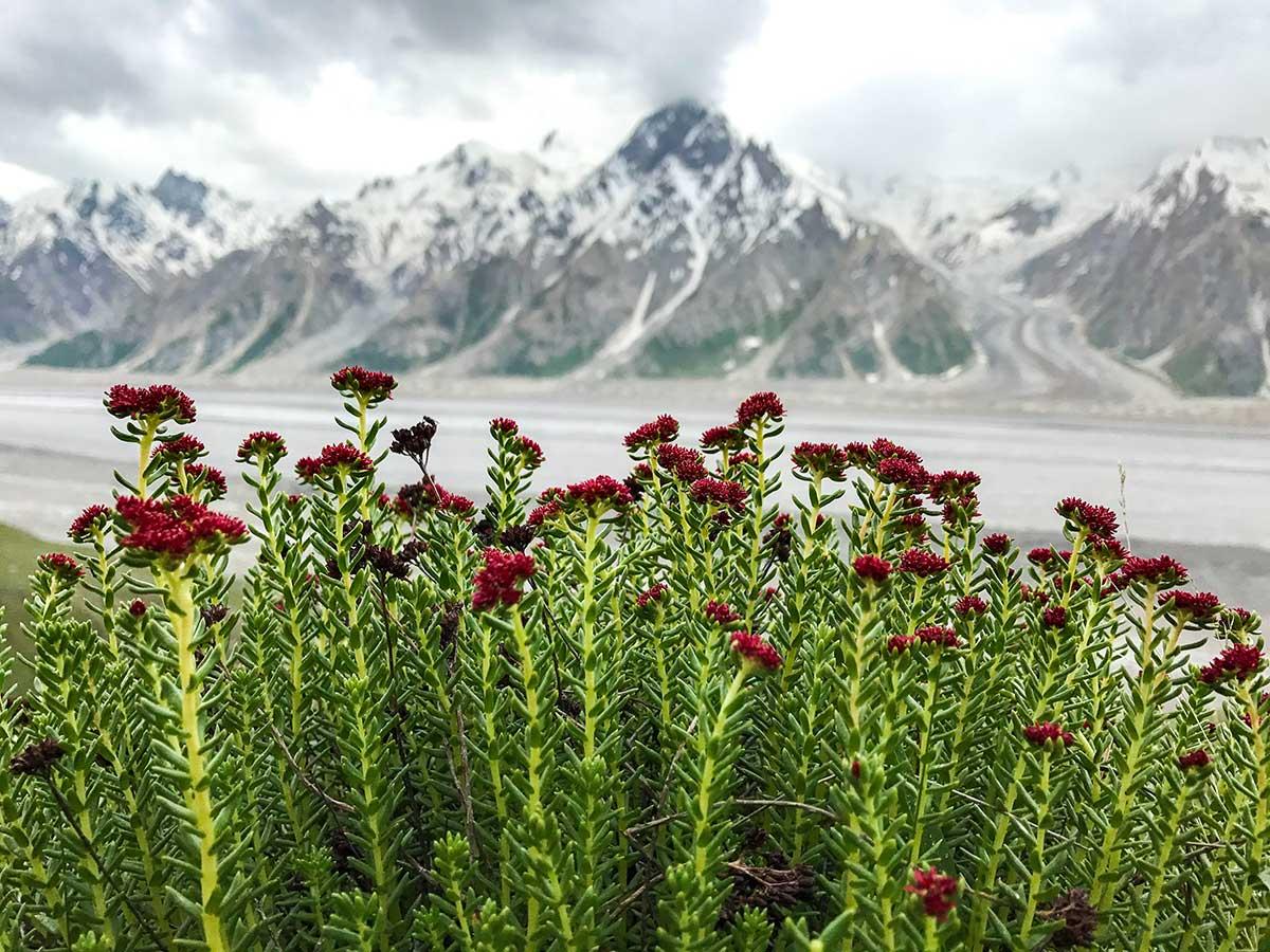 Shigam Baris on Hispar Glacier