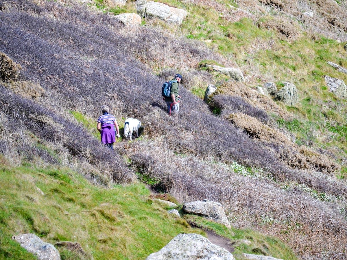 Cornwall walking through gorse with dog