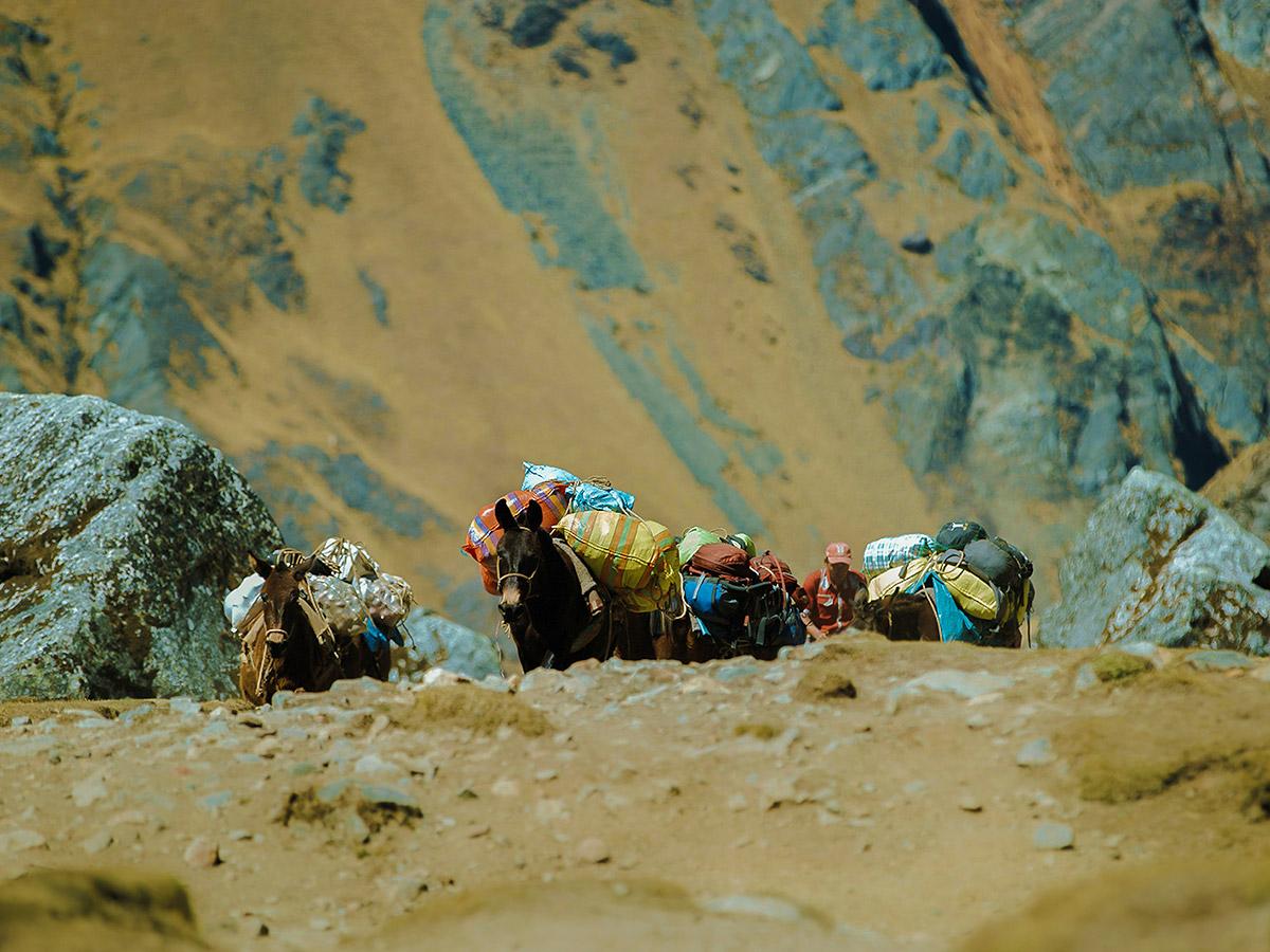 Donkeys carrying stuff on Salkantay Trek to Machu Picchu in Peru