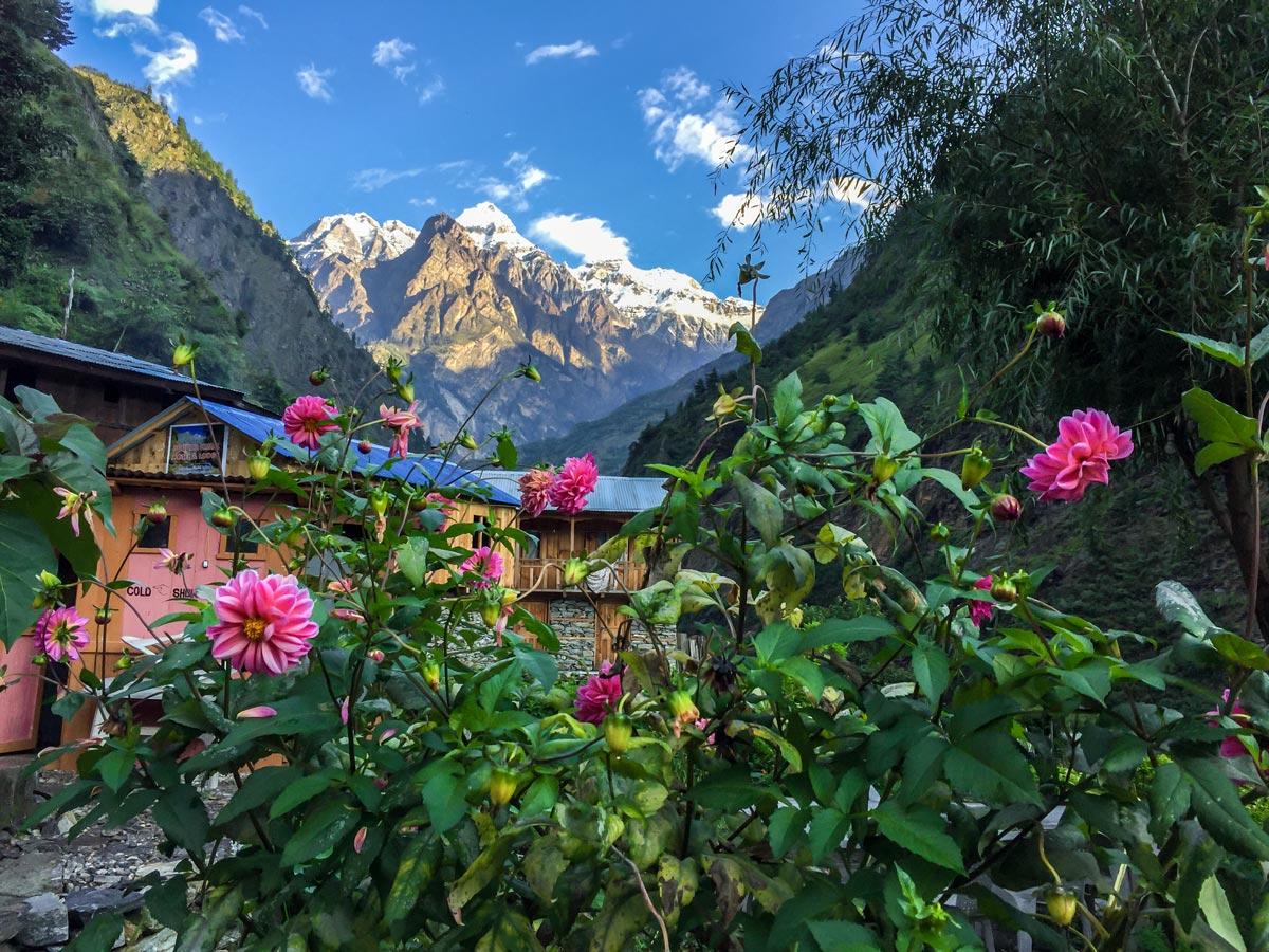 Flowers along the trail of Manaslu Circuit trek in Nepal
