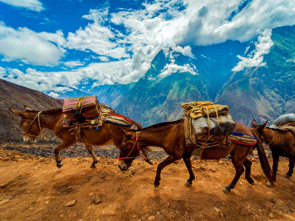 Donkeys on Choquequirao Trek in Peru near Cusco